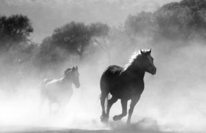Two wild horses galloping